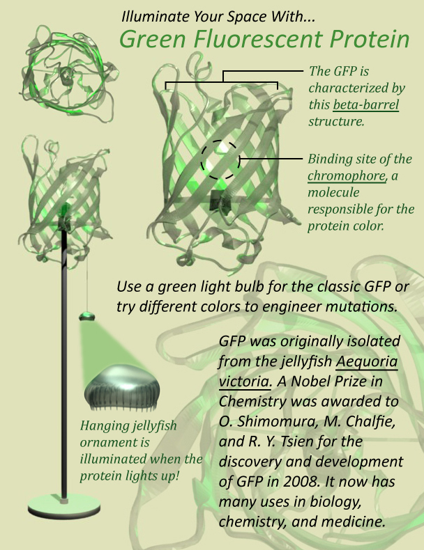 cchao1-GFP-Lamp